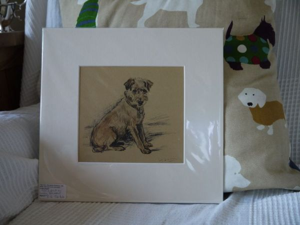 Coloured Terrier sitting - Ter D6 - 1930's print by Lucy Dawson